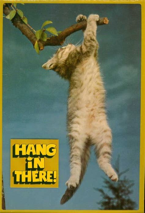 hang in there cat 301 moved permanently