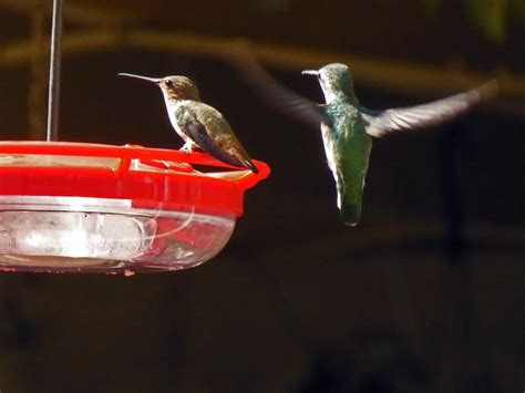 shooting hummingbirds mixed meters