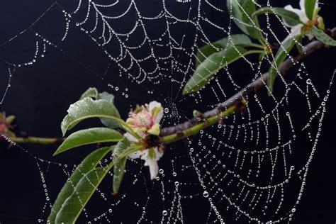 spider web christmas tradition 7 traditions from around the world huffpost
