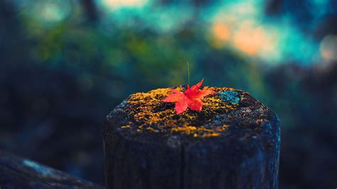 Autumn Hd Wallpapers Full Hd Free Download