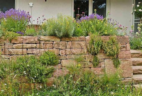 pflanzen für trockenmauer pflanzen auf trockenmauern wildbienenschutz im naturgarten