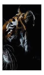 Animal Tiger 4K HD Wallpapers | HD Wallpapers | ID #33387