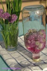 Essig Geruch Neutralisieren : in die flasche gefl stert schnittlauchbl ten essig glasgefluester ~ Bigdaddyawards.com Haus und Dekorationen