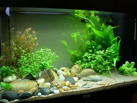 les plus beaux aquarium de forum aquariophilie aqua lorca ma culture d algues vertes filamenteuses et de cyanobact 233 ries