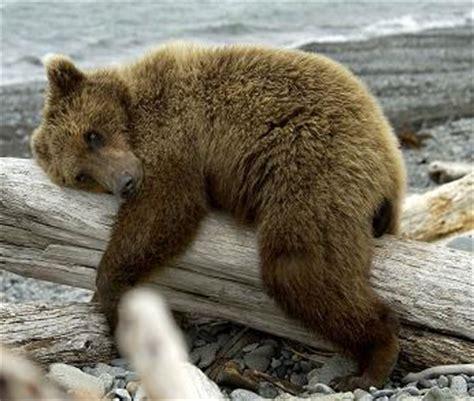 changement du bureau d une association la route de l 39 ours