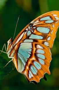 Beautiful Butterflies Wings