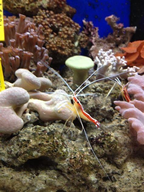 aquarium aix en provence aquarium aix en provence 28 images mod 232 les et r 233 alisations center aquarium meuble