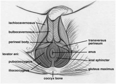 how to do kegel exercises for men a definitive guide to