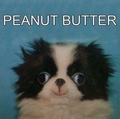 Derp Dog Meme - lol dog puppy animal derp pup peanut butter knowyourmeme
