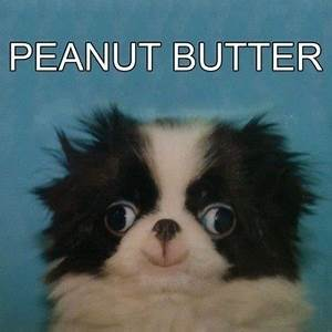 LOL dog puppy animal derp pup peanut butter knowyourmeme •