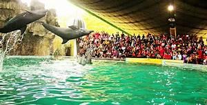 Ocean Dream Samudra Dolphin Show In Jakarta