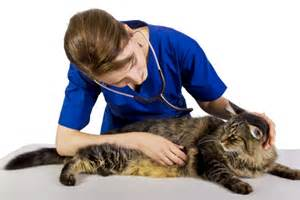 6 ways to be a veterinary client catster