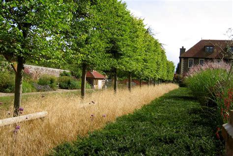 Ornamental Grasses Wholesale Plant Nurseries Oxfordshire