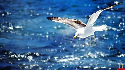 Wallpapers Backgrounds Desktop Beauty Lovely Nature Seagull