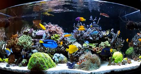 salt water fish tank top 10 saltwater aquarium fish for beginners mad hatter s reef