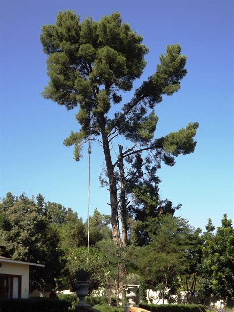 tree felling brands tree felling