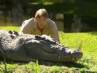 crocodile hunter gifs find share  giphy