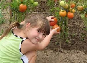 Lüften Bei Regen : botanicum gmbh tomaten ~ Eleganceandgraceweddings.com Haus und Dekorationen