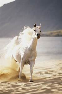 White Horse On The Beach by Vince Cavataio - Printscapes