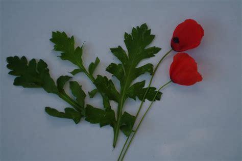 poppy leaves horta lessons skopelosnews