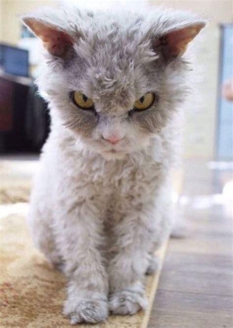kitties   dont   mess  viral cats blog