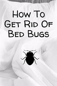 how to get rid of bed bugs domestications bedding With bed bugs pillows getting rid