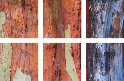 Texture Wood Madrone Bark Pacific Arbor Vinyl