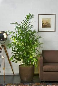 Bambus Pflege In Der Vase : sch ne zimmerpflanzen erf llen die rolle von dekoration ~ Lizthompson.info Haus und Dekorationen