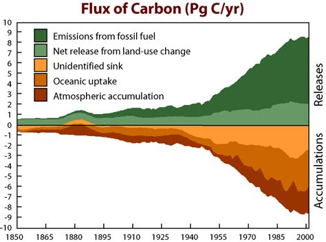 define carbon sink forest exactly where does all that co2 go scientists in