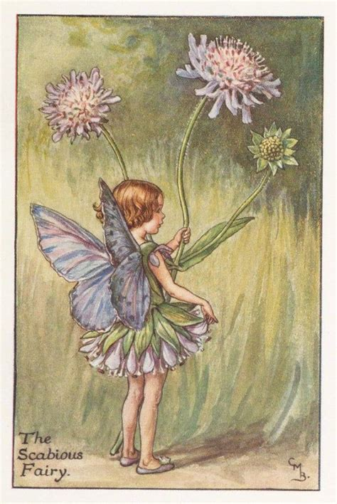 Flower Fairies: THE SCABIOUS FAIRY Vintage Print c1930 by ...