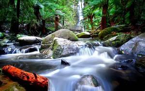 Tropical, Waterfall, Jungle, Trees, Palm, Trees, Rocks, Green, Moss, Erskine, Falls, Attraction, Road, Lorne