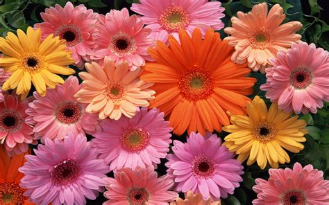 World's Top 100 Beautiful Flowers Images Wallpaper Photos