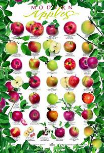 Diet Food Chart Pin On Free Garden Charts