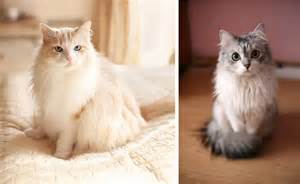 Long Haired Cat Grooming Tips