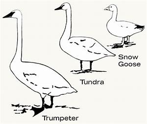 The Trumpeter Swan Society