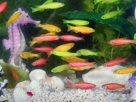 types  aquarium fish  good luck boldskycom