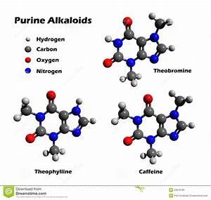 Alkaloids - Caffeine, Theobromine, Theophylline Stock ...