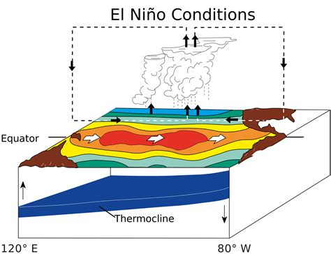 Typical Ensoneutral (left) And El Niño (right) Conditions