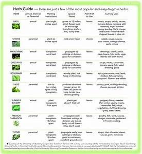 A Beginners U0026 39  Guide To Growing Fresh Cooking Herbs