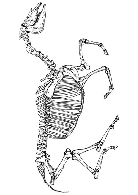 skeleton coloring pages coloringstar