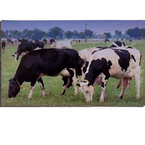 cadeau vache paillasson