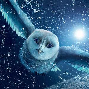 Cool Owl - Best Animal Wallpapers
