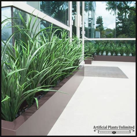 25 Best Of Tall Outdoor Plants