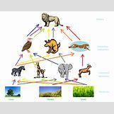 Grassland Energy Pyramid | 976 x 774 png 207kB