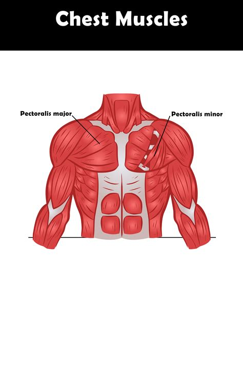 Does anyone experience muscle twitching in the chest area? Best Chest Exercises