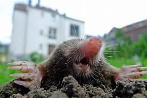 Garten Schädlinge Bekämpfen : fotoshow bersicht ~ Michelbontemps.com Haus und Dekorationen
