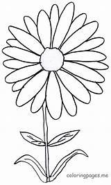 Daisy Coloring Flower Printable Bunga Dibujos Colorear Margaritas Margarita Mewarnai Imprimir Gambar Daisies Tk Anak Drawing Untuk Flores Bouquet Sketsa sketch template