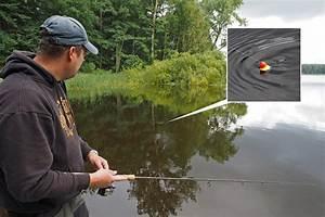 Bilder Mit Fischen : barsche angeln mit der pose dr catch besser angeln ~ Frokenaadalensverden.com Haus und Dekorationen