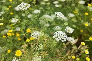 Unkraut Weiße Blüte : wiese mit gelben und wei en bl ten stock foto colourbox ~ Lizthompson.info Haus und Dekorationen