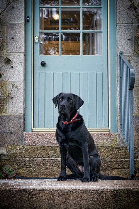 Luxury Cottages Pet Friendly by Luxury Pet Friendly Cottage In Scotland Alpha Cottage